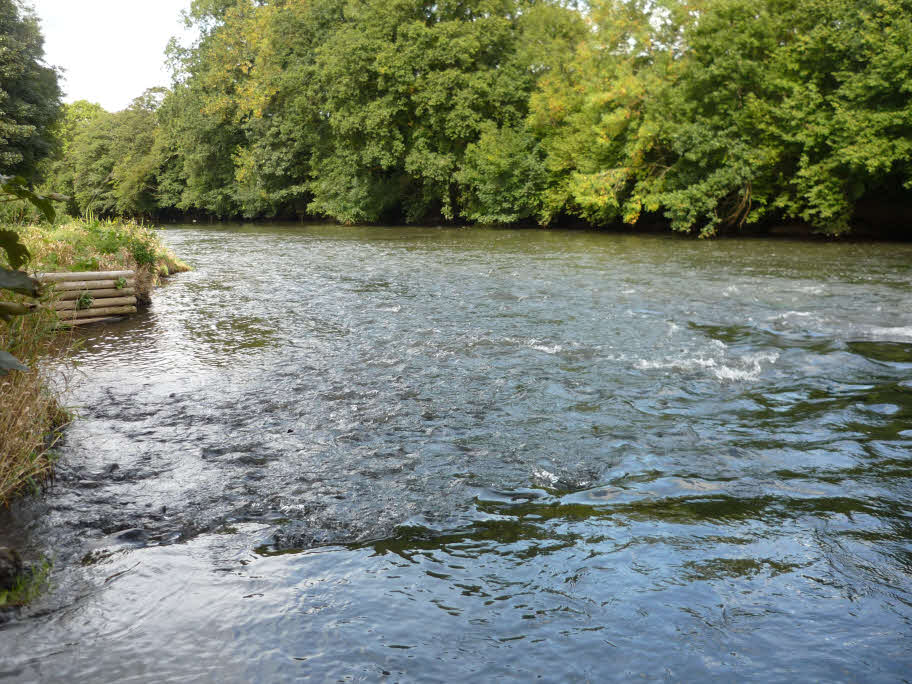 River Taw - One of England's finest game fishing rivers